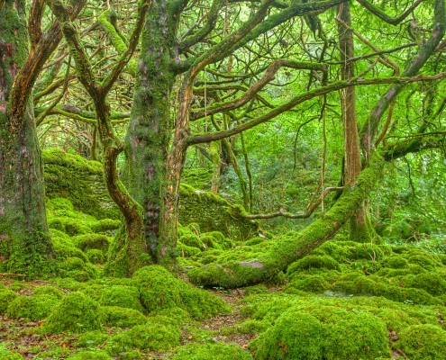 stockvault-killarney-forest---hdr135440