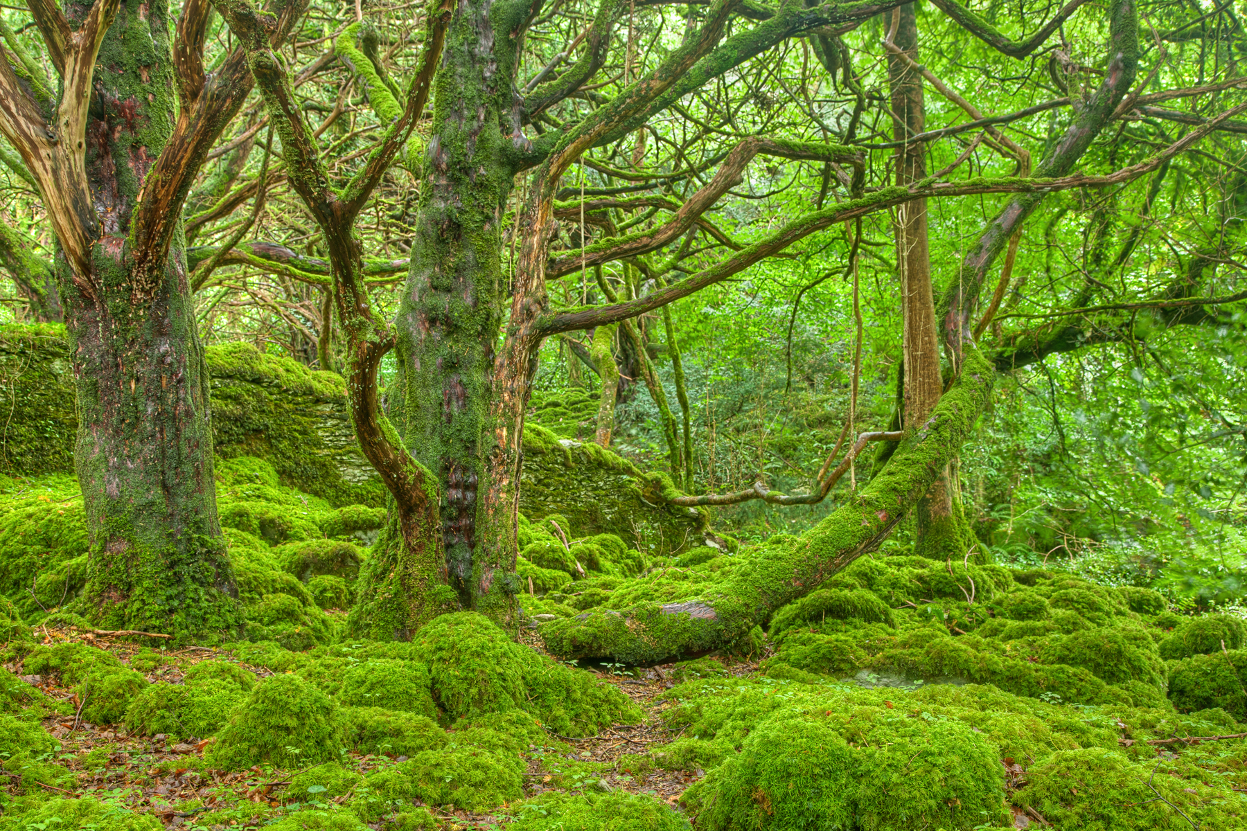 stockvault-killarney-forest—hdr135440